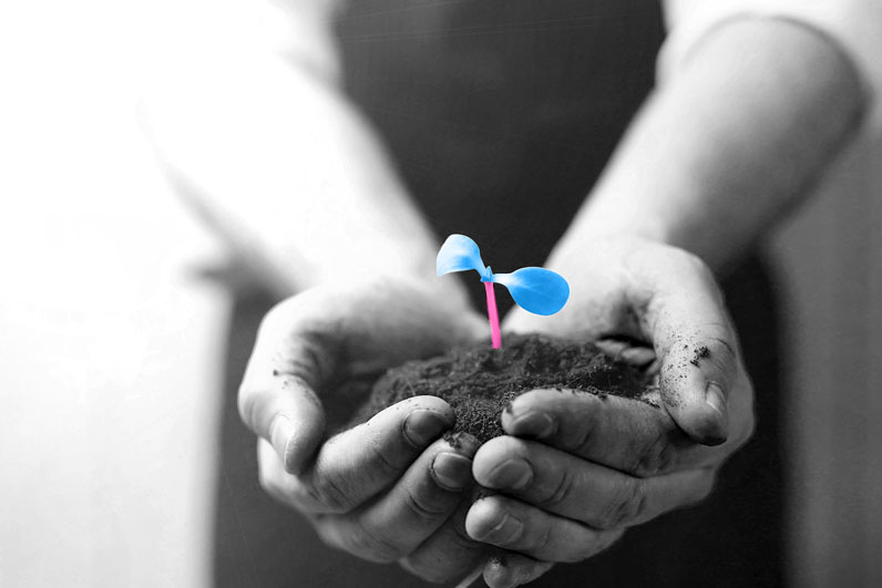 Blue-and-Pink-sapling-in-hands
